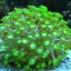 green_coral